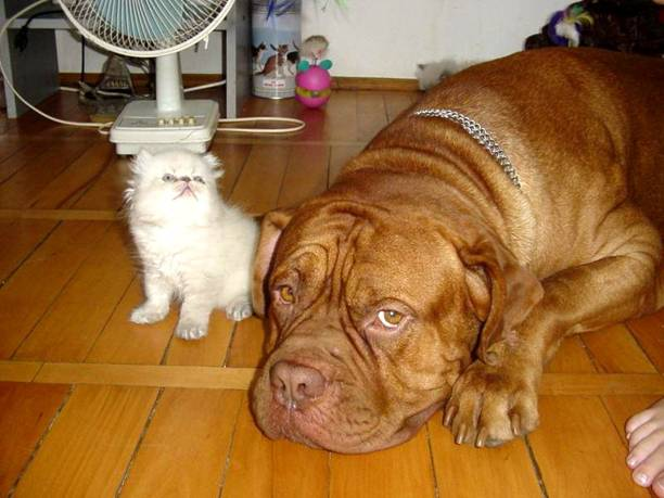 dog_and_cat_2.jpg