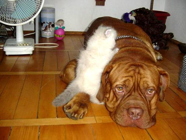 dog_and_cat_4.jpg